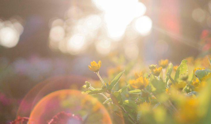 beautiful-blur-bright-917076